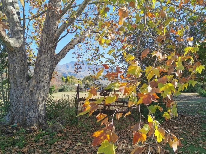 Autumn at Swallowfield Rondavels